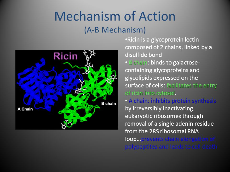 Mechanism of Action (A-B Mechanism) Ricin is a glycoprotein lectin composed of 2 chains, linked by a disulfide bond B chain facilitates the entry of ricin into cytosol B chain: binds to galactose- containing glycoproteins and glycolipids expressed on the surface of cells: facilitates the entry of ricin into cytosol.