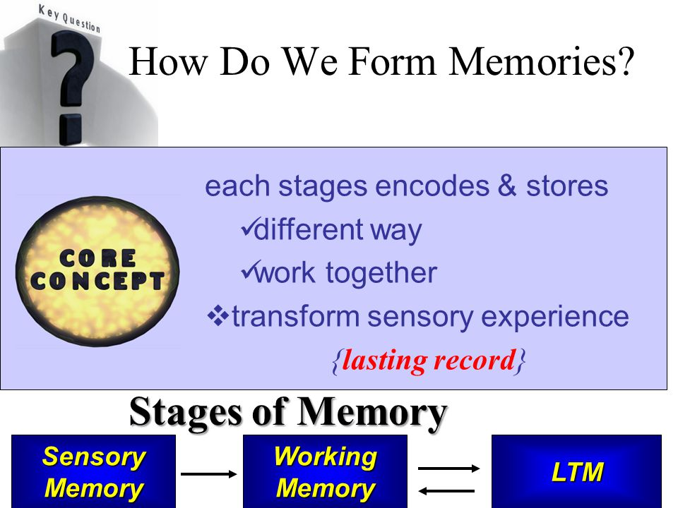each stages encodes & stores different way work together  transform sensory experience {lasting record} How Do We Form Memories? Stages of Memory Sen