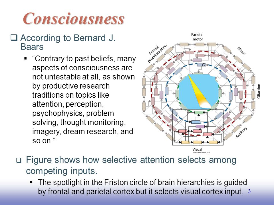 EE141 24 Brain basis of conscious experience  Conscious cognition is close to attention, however not identical.