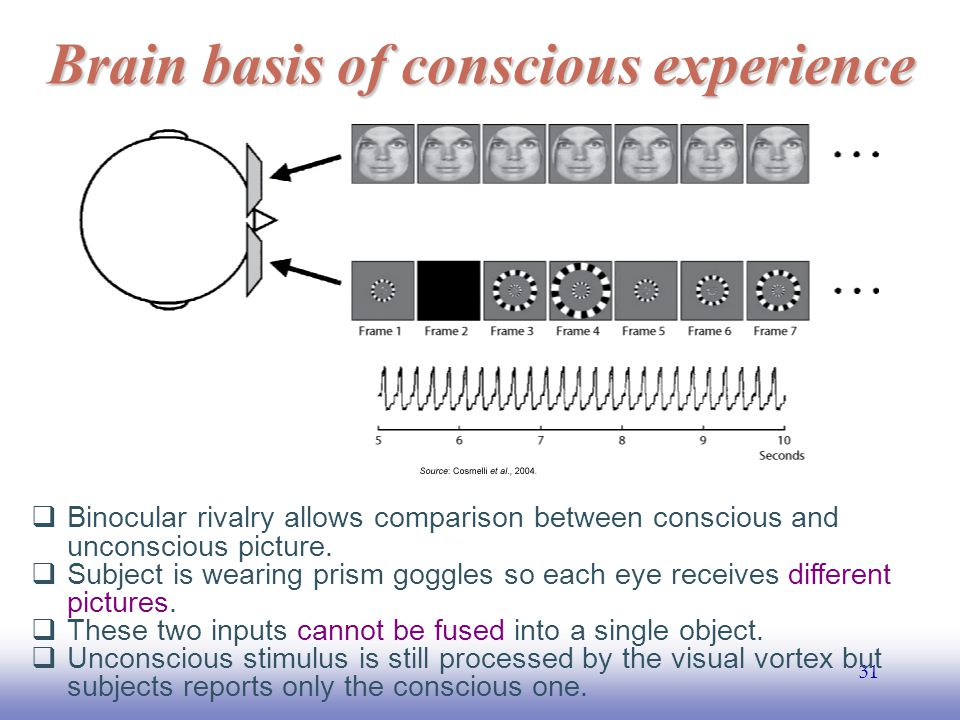 EE141 31 Brain basis of conscious experience  Binocular rivalry allows comparison between conscious and unconscious picture.