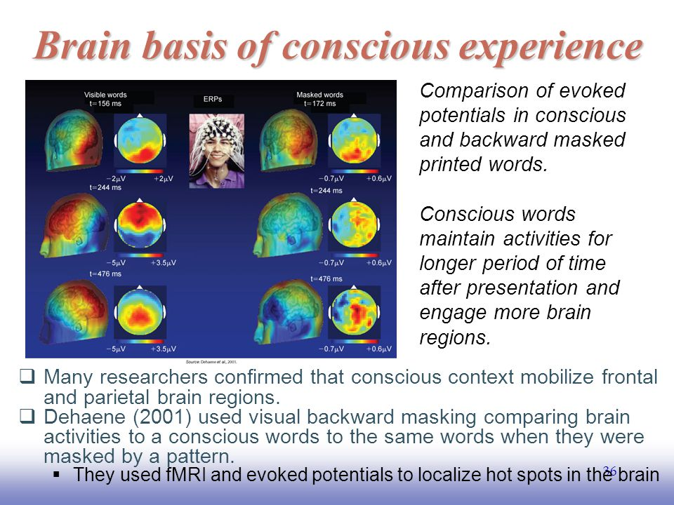 EE141 36 Brain basis of conscious experience  Many researchers confirmed that conscious context mobilize frontal and parietal brain regions.
