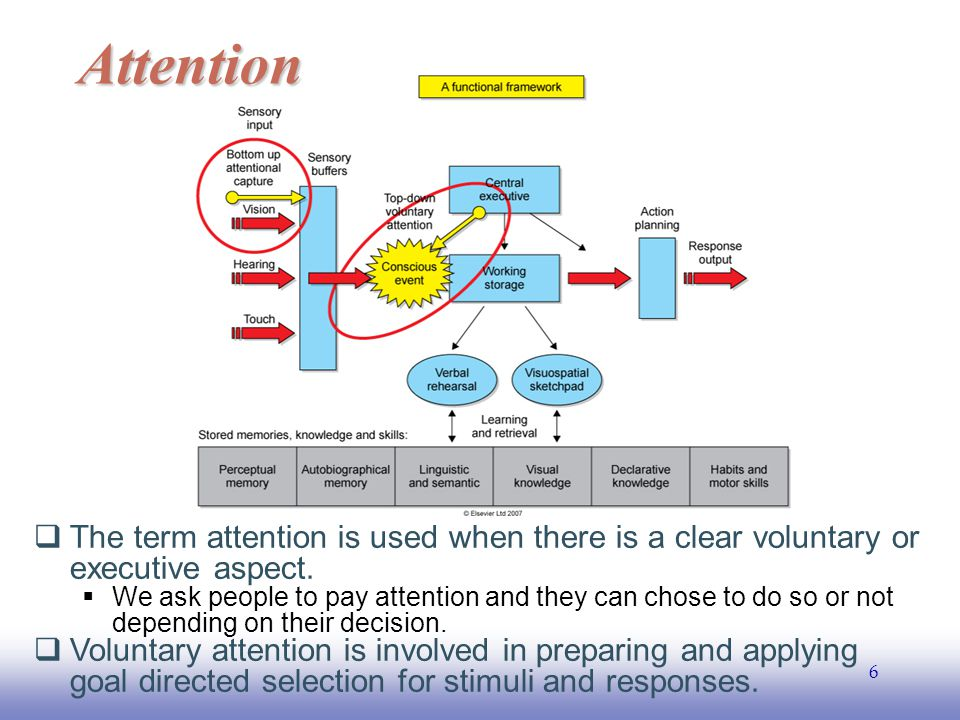 EE141 17 Brain basis of attention  Multiple salience maps has been proposed.