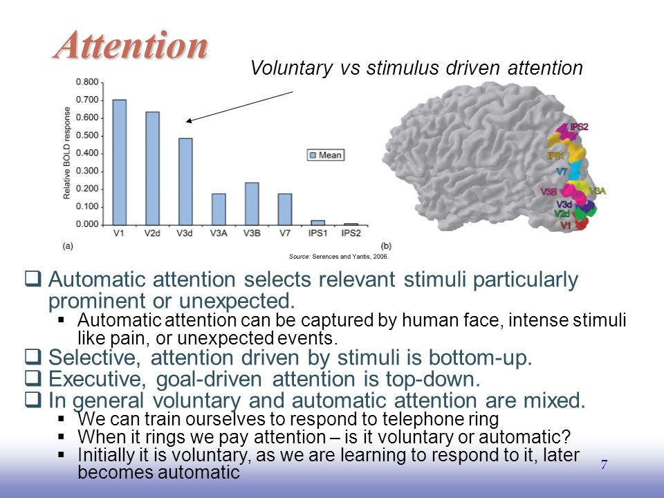 EE141 7 Attention  Automatic attention selects relevant stimuli particularly prominent or unexpected.