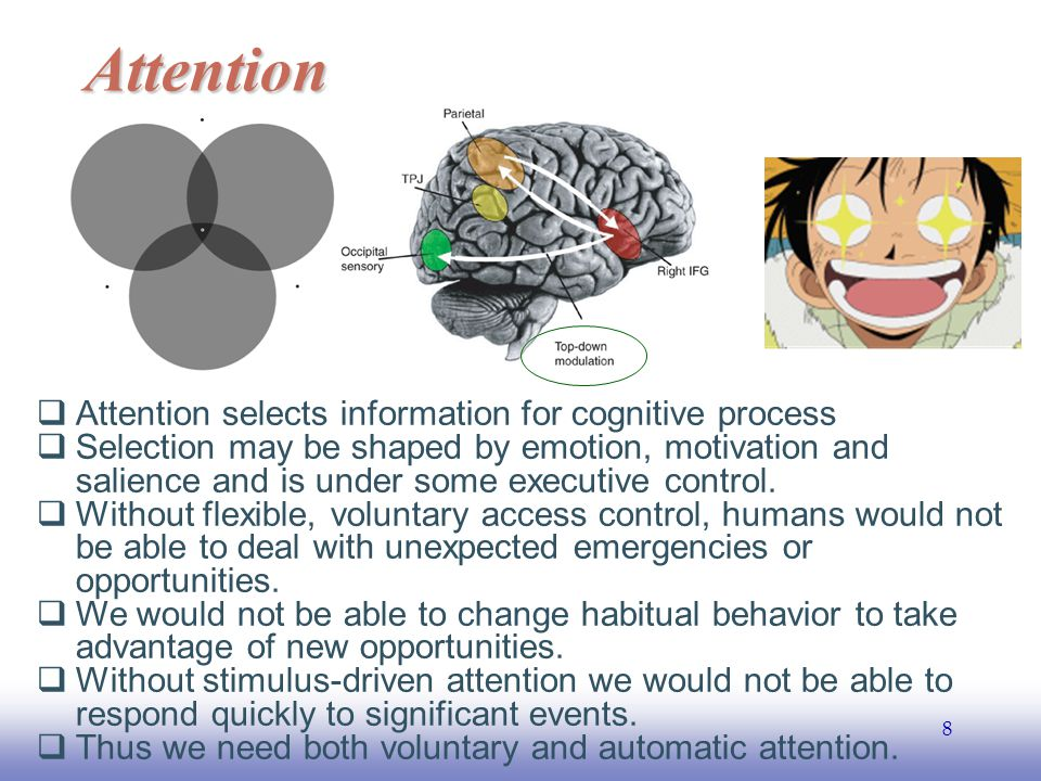 EE141 8 Attention  Attention selects information for cognitive process  Selection may be shaped by emotion, motivation and salience and is under some executive control.