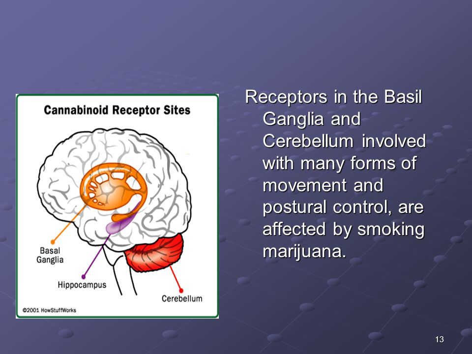 13 Receptors in the Basil Ganglia and Cerebellum involved with many forms of movement and postural control, are affected by smoking marijuana.