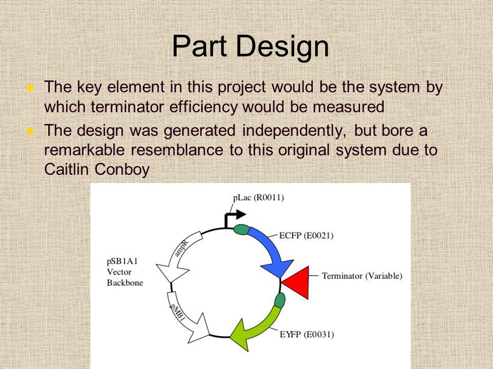 Part Design The key element in this project would be the system by which terminator efficiency would be measured The design was generated independently, but bore a remarkable resemblance to this original system due to Caitlin Conboy