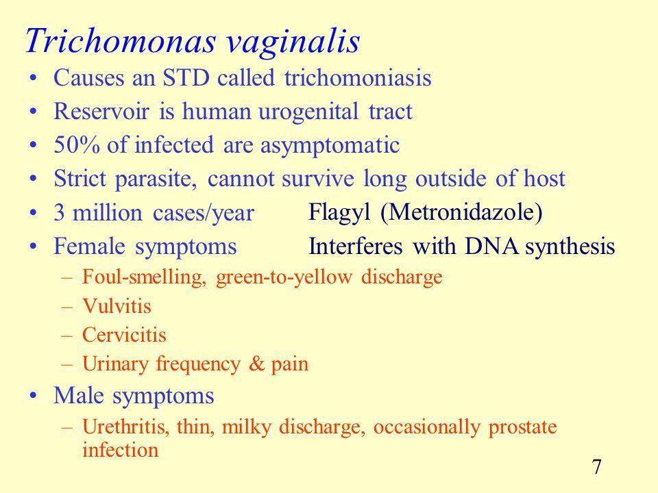 38 Hookworms