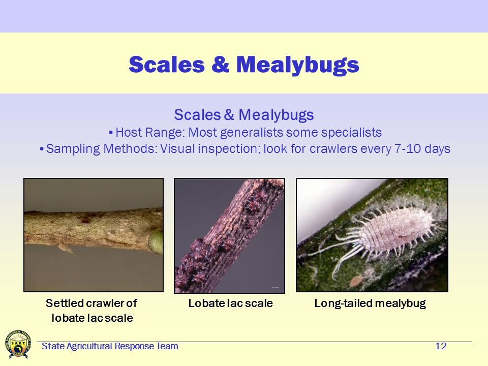 State Agricultural Response Team11 Major Groups of Arthropod Pests Scales & Mealybugs Aphids & Whiteflies Spider Mites Borers & Beetles Caterpillars & Thrips Claw of assassin bug: Courtesy Imaging Technology Group, Beckman Institute, Univ.