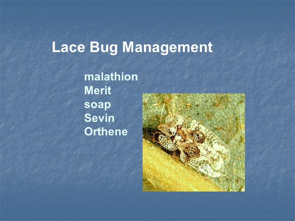 malathion Merit soap Sevin Orthene Lace Bug Management