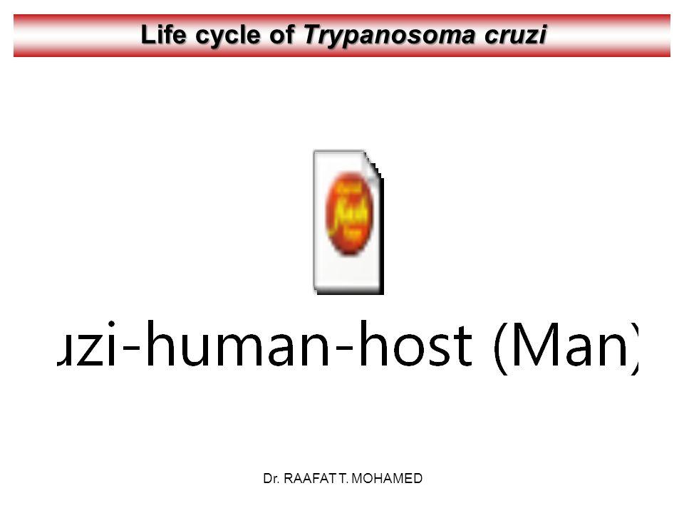 Life cycle of Trypanosoma cruzi Dr. RAAFAT T. MOHAMED