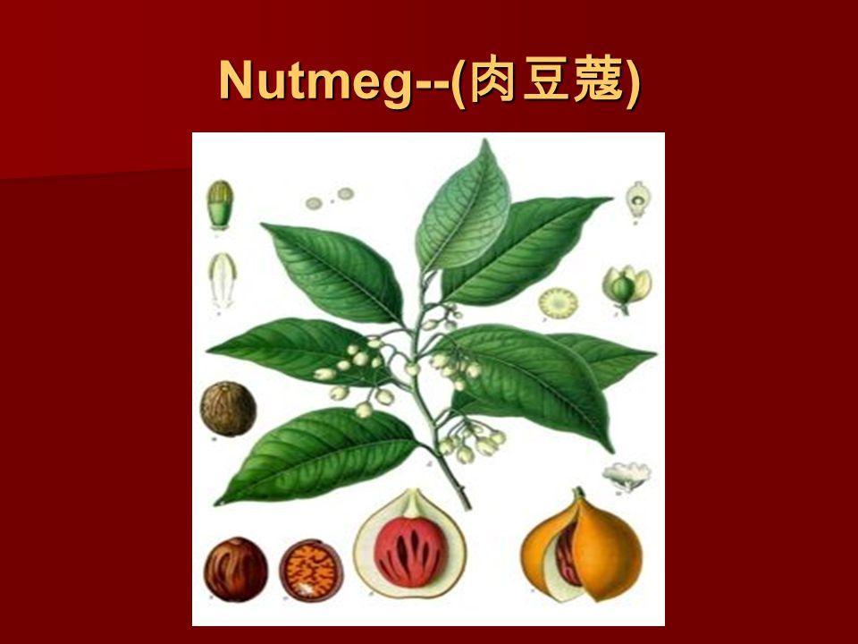 Nutmeg--( 肉豆蔻 )