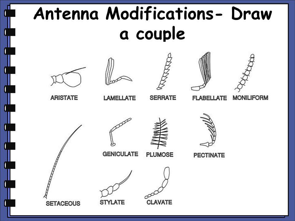 Antenna Modifications- Draw a couple