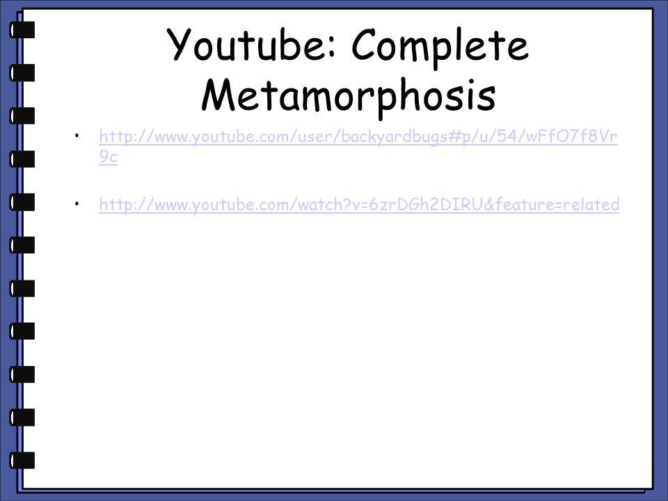 Youtube: Complete Metamorphosis http://www.youtube.com/user/backyardbugs#p/u/54/wFfO7f8Vr 9chttp://www.youtube.com/user/backyardbugs#p/u/54/wFfO7f8Vr