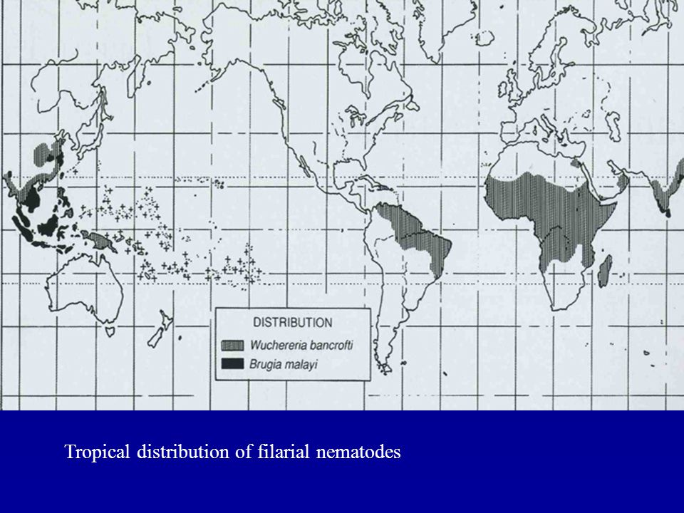 Tropical distribution of filarial nematodes