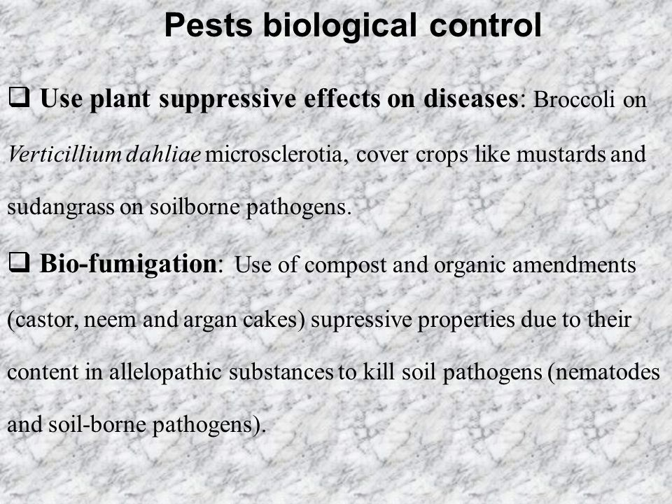 Pests biological control  Use plant suppressive effects on diseases: Broccoli on Verticillium dahliae microsclerotia, cover crops like mustards and s