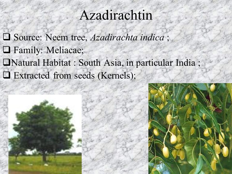 Azadirachtin  Source: Neem tree, Azadirachta indica ;  Family: Meliacae;  Natural Habitat : South Asia, in particular India ;  Extracted from seed