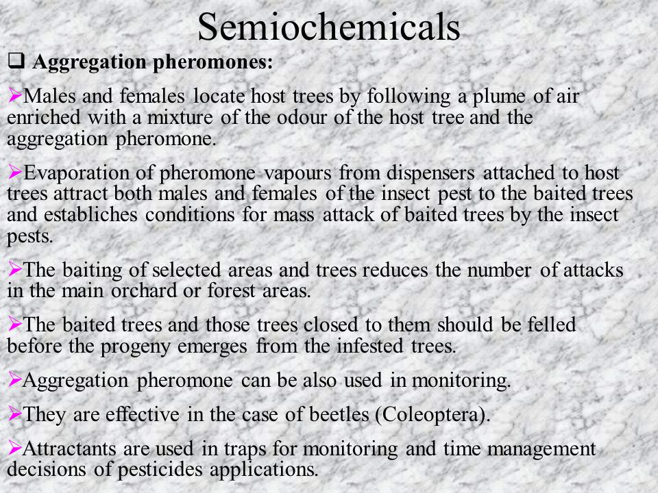 Semiochemicals  Aggregation pheromones:  Males and females locate host trees by following a plume of air enriched with a mixture of the odour of the