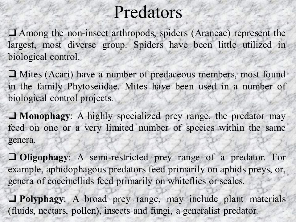Predators  Among the non-insect arthropods, spiders (Araneae) represent the largest, most diverse group. Spiders have been little utilized in biologi