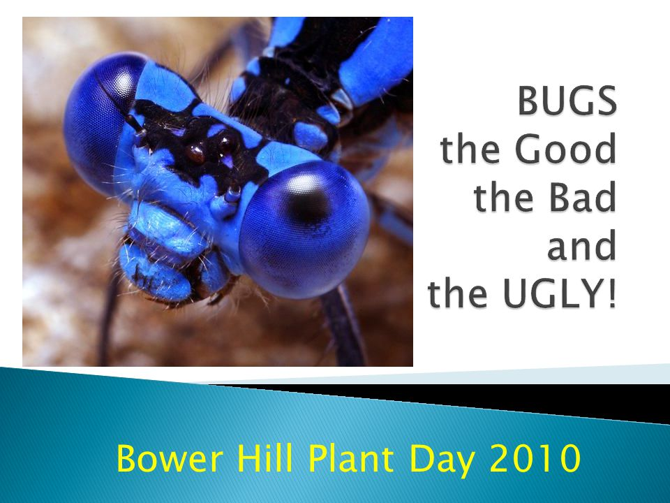 Bower Hill Plant Day 2010