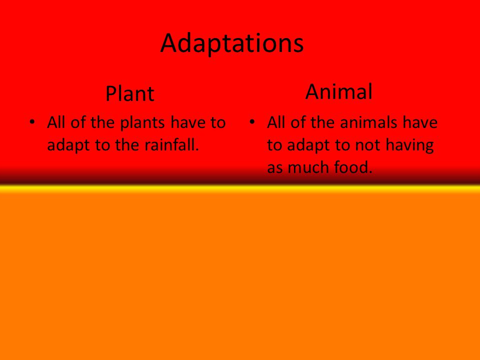 Adaptations All of the plants have to adapt to the rainfall. All of the animals have to adapt to not having as much food. Plant Animal