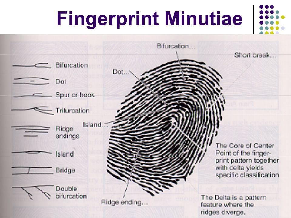 Fingerprint Minutiae