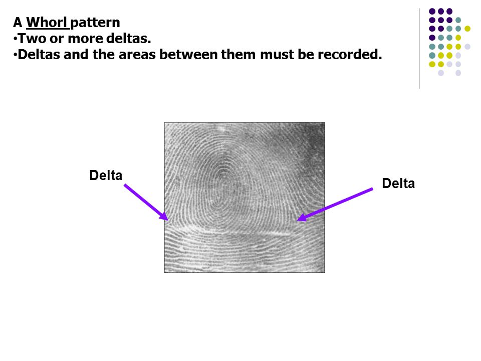 A Whorl pattern Two or more deltas. Deltas and the areas between them must be recorded. Delta