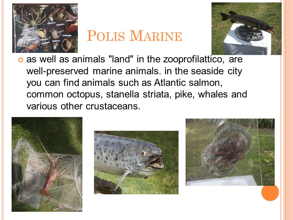 P OLIS M ARINE as well as animals land in the zooprofilattico, are well-preserved marine animals.