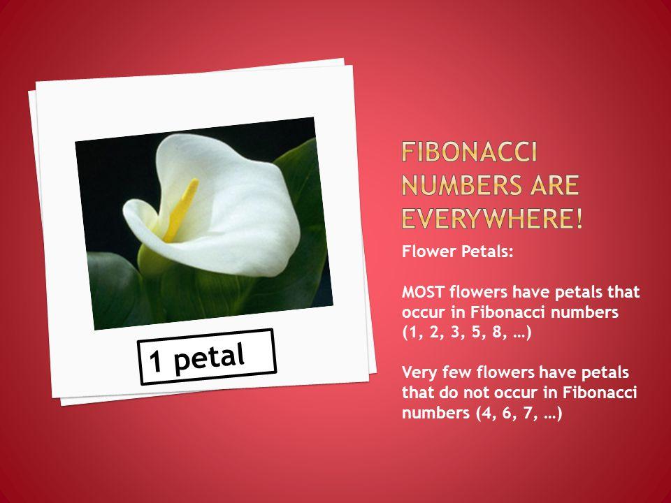 2 petal 3 petal 5 petal 8 petal