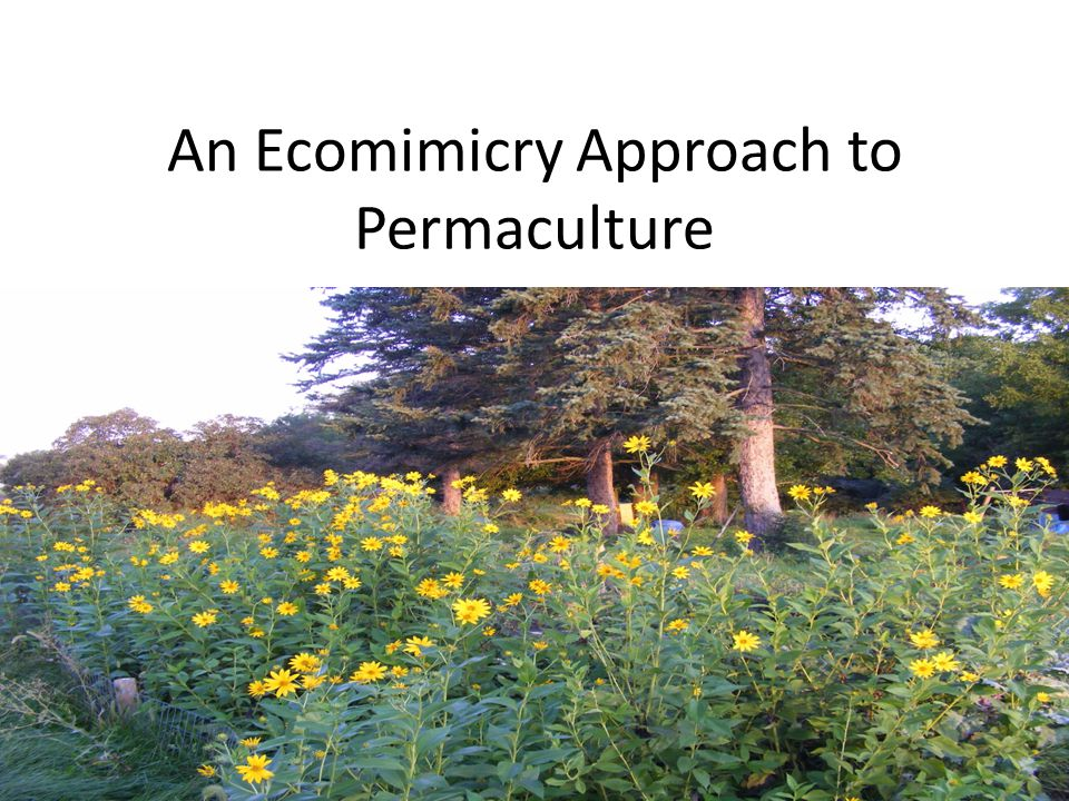An Ecomimicry Approach to Permaculture