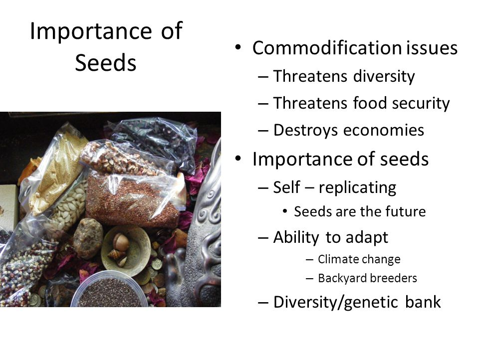 Importance of Seeds Commodification issues – Threatens diversity – Threatens food security – Destroys economies Importance of seeds – Self – replicati