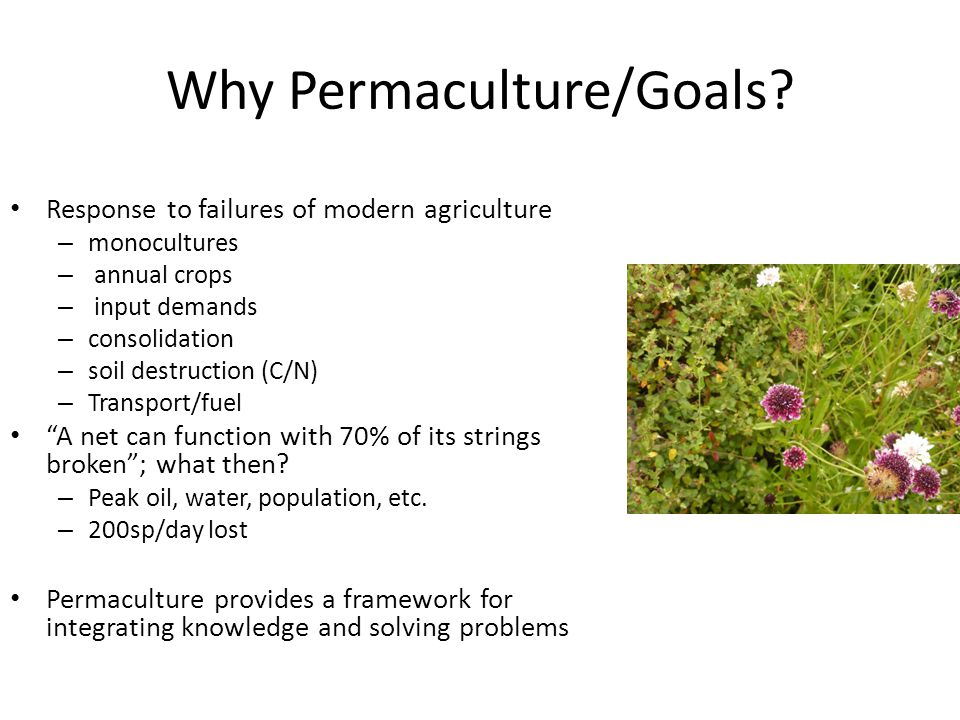 Why Permaculture/Goals? Response to failures of modern agriculture – monocultures – annual crops – input demands – consolidation – soil destruction (C