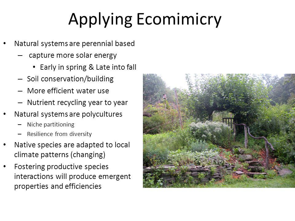 Applying Ecomimicry Natural systems are perennial based – capture more solar energy Early in spring & Late into fall – Soil conservation/building – Mo