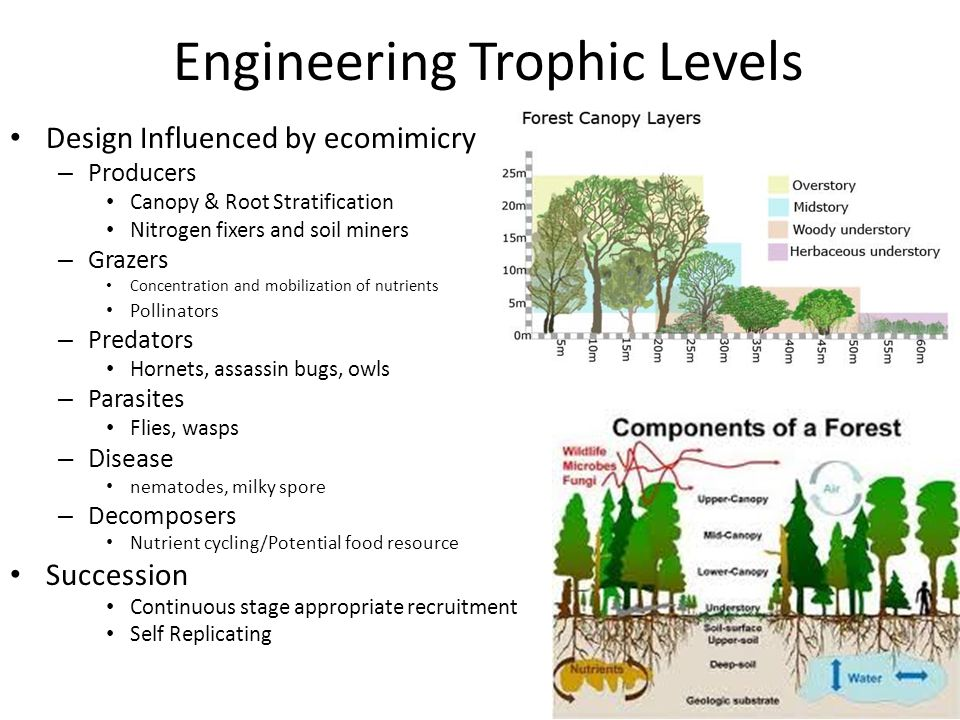 Engineering Trophic Levels Design Influenced by ecomimicry – Producers Canopy & Root Stratification Nitrogen fixers and soil miners – Grazers Concentr
