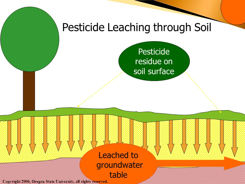 Pesticide Leaching through Soil Leached to groundwater table Pesticide residue on soil surface Copyright 2006, Oregon State University, all rights reserved.