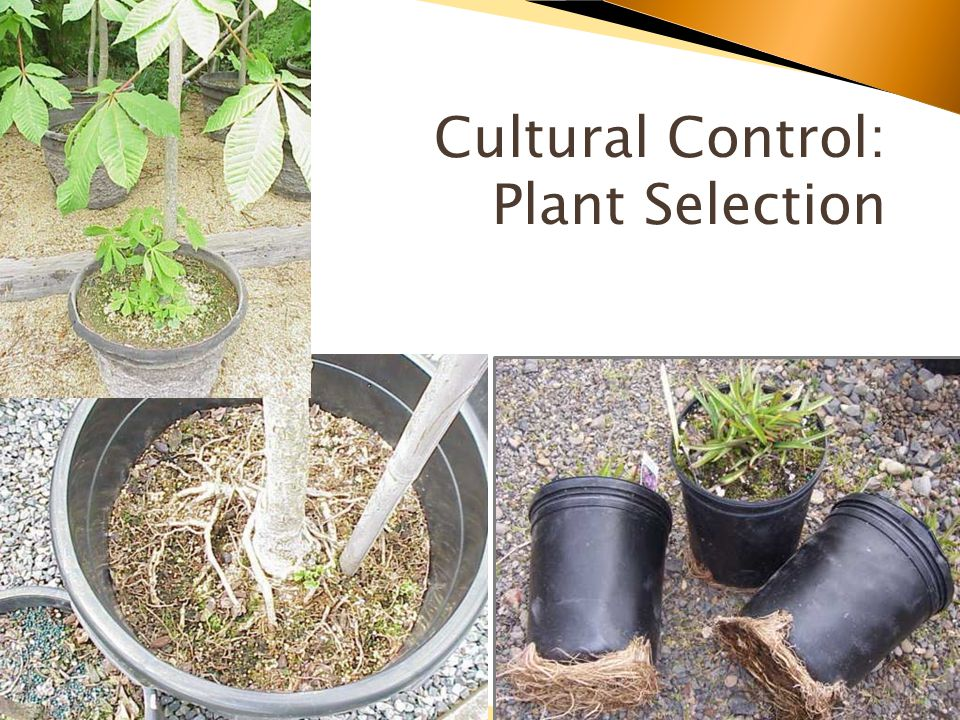 Cultural Control: Plant Selection