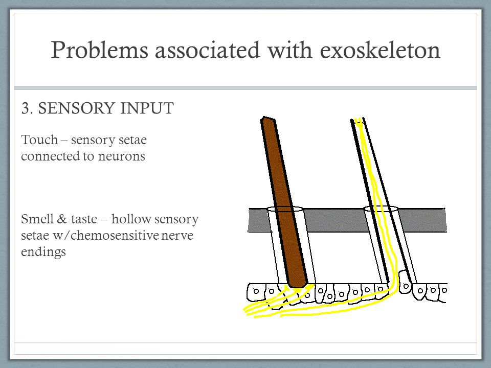 Problems associated with exoskeleton 3.