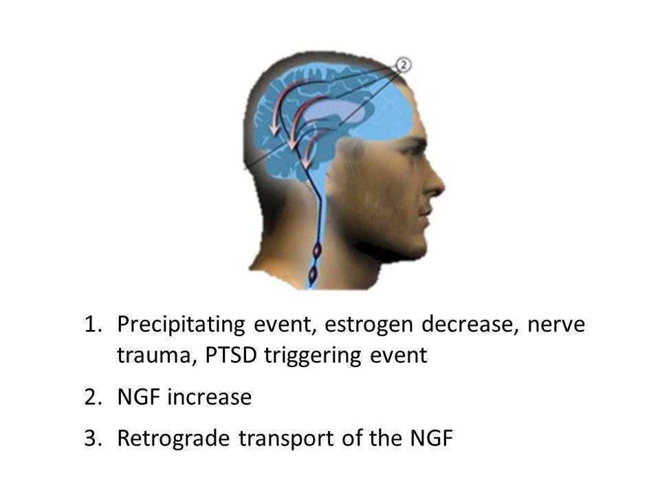 1.Precipitating event, estrogen decrease, nerve trauma, PTSD triggering event 2.NGF increase 3.Retrograde transport of the NGF