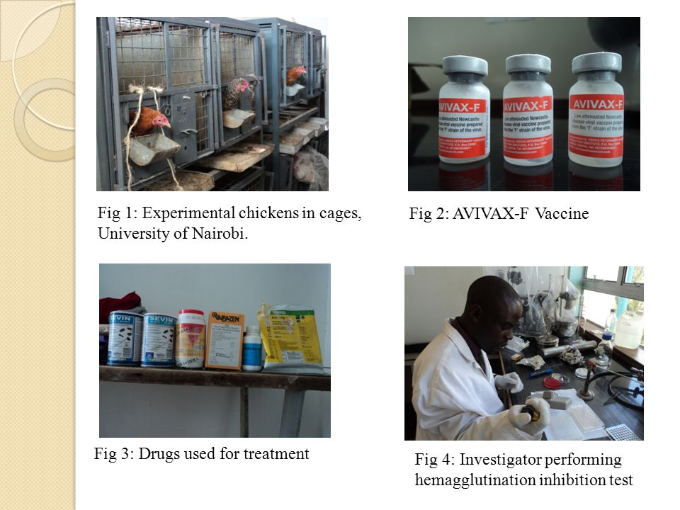 Fig 2: AVIVAX-F Vaccine Fig 3: Drugs used for treatment Fig 4: Investigator performing hemagglutination inhibition test Fig 1: Experimental chickens in cages, University of Nairobi.