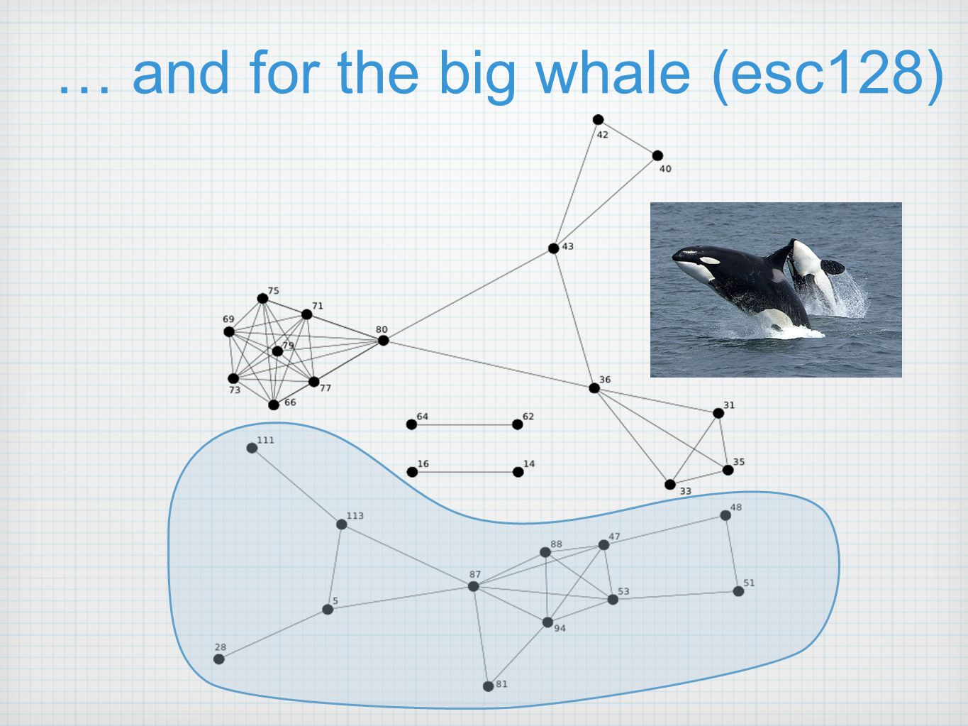 … and for the big whale (esc128)