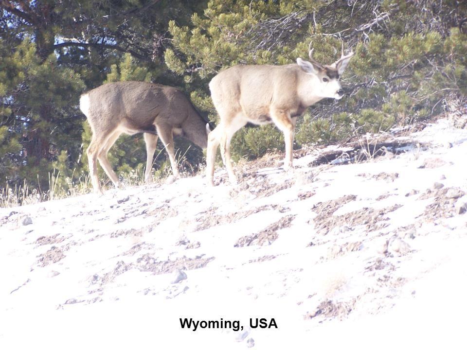 26 Africa Johannesburg Wyoming, USA