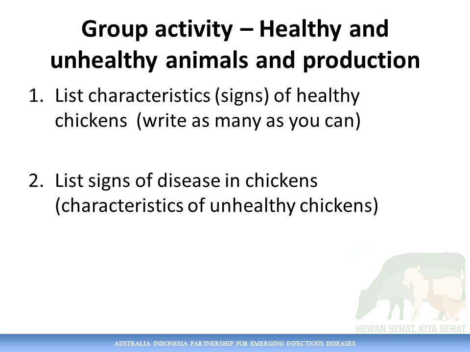 AUSTRALIA INDONESIA PARTNERSHIP FOR EMERGING INFECTIOUS DISEASES Group activity – Healthy and unhealthy animals and production 1.List characteristics