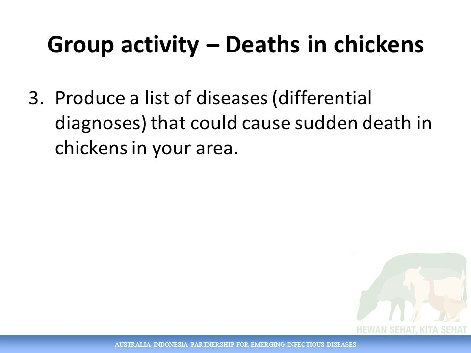 AUSTRALIA INDONESIA PARTNERSHIP FOR EMERGING INFECTIOUS DISEASES Group activity – Deaths in chickens 3.Produce a list of diseases (differential diagno