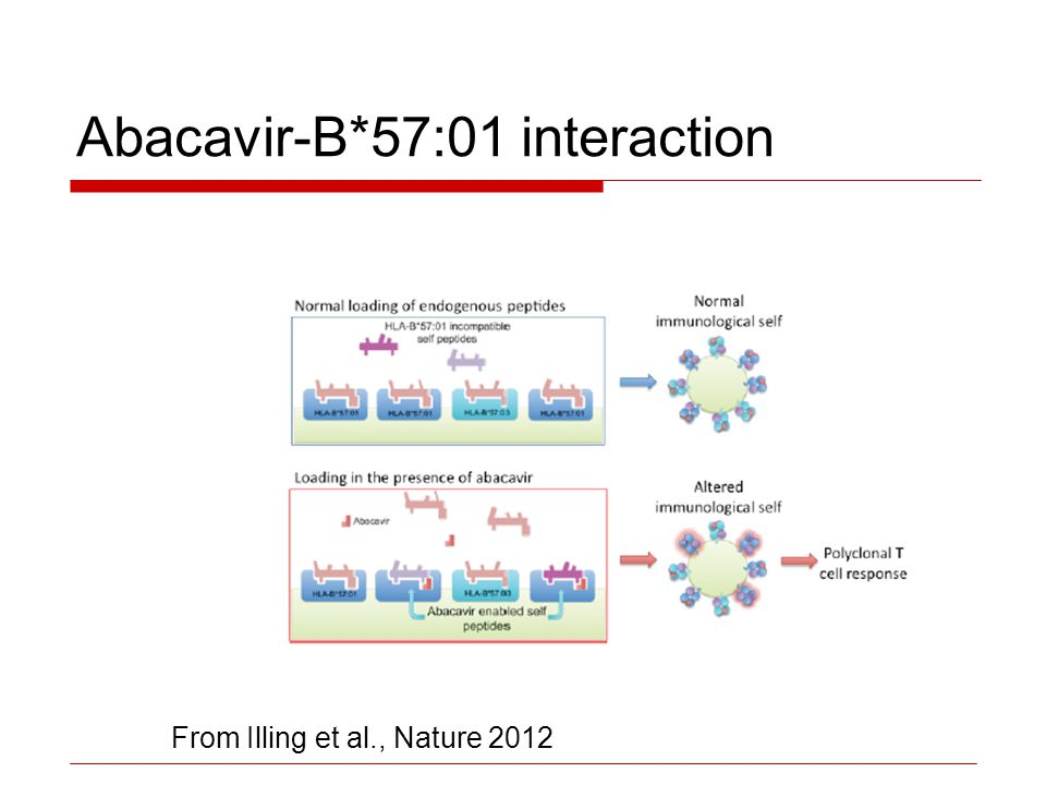 Abacavir-B*57:01 interaction From Illing et al., Nature 2012