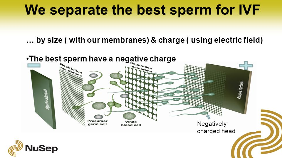 We separate the best sperm for IVF … by size ( with our membranes) & charge ( using electric field) The best sperm have a negative charge Negatively charged head