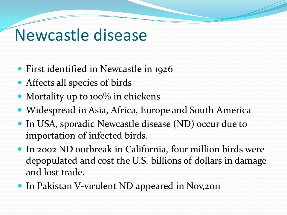 Newcastle disease First identified in Newcastle in 1926 Affects all species of birds Mortality up to 100% in chickens Widespread in Asia, Africa, Euro