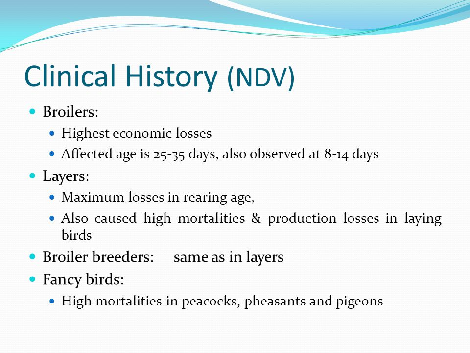Clinical History (NDV) Broilers: Highest economic losses Affected age is 25-35 days, also observed at 8-14 days Layers: Maximum losses in rearing age,