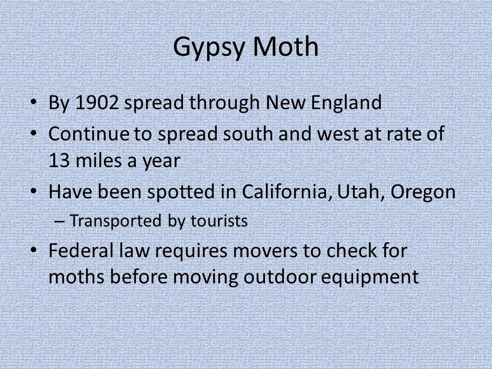 Gypsy Moth By 1902 spread through New England Continue to spread south and west at rate of 13 miles a year Have been spotted in California, Utah, Oregon – Transported by tourists Federal law requires movers to check for moths before moving outdoor equipment