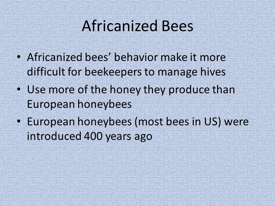 Africanized Bees Africanized bees' behavior make it more difficult for beekeepers to manage hives Use more of the honey they produce than European honeybees European honeybees (most bees in US) were introduced 400 years ago