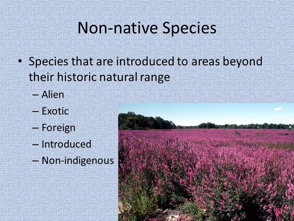 Non-native Species Species that are introduced to areas beyond their historic natural range – Alien – Exotic – Foreign – Introduced – Non-indigenous