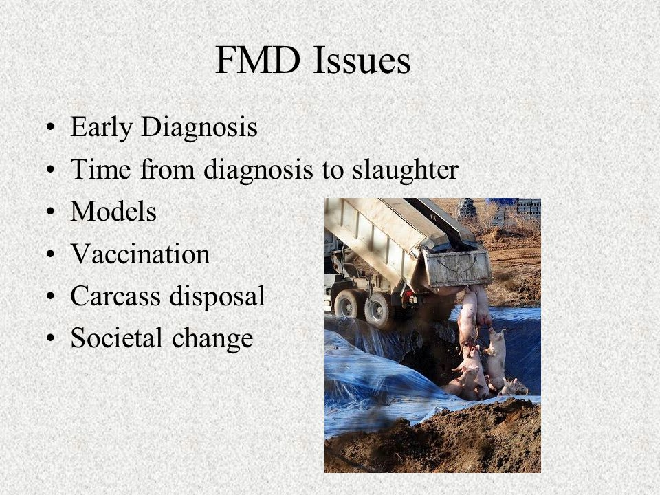 FMD Issues Early Diagnosis Time from diagnosis to slaughter Models Vaccination Carcass disposal Societal change